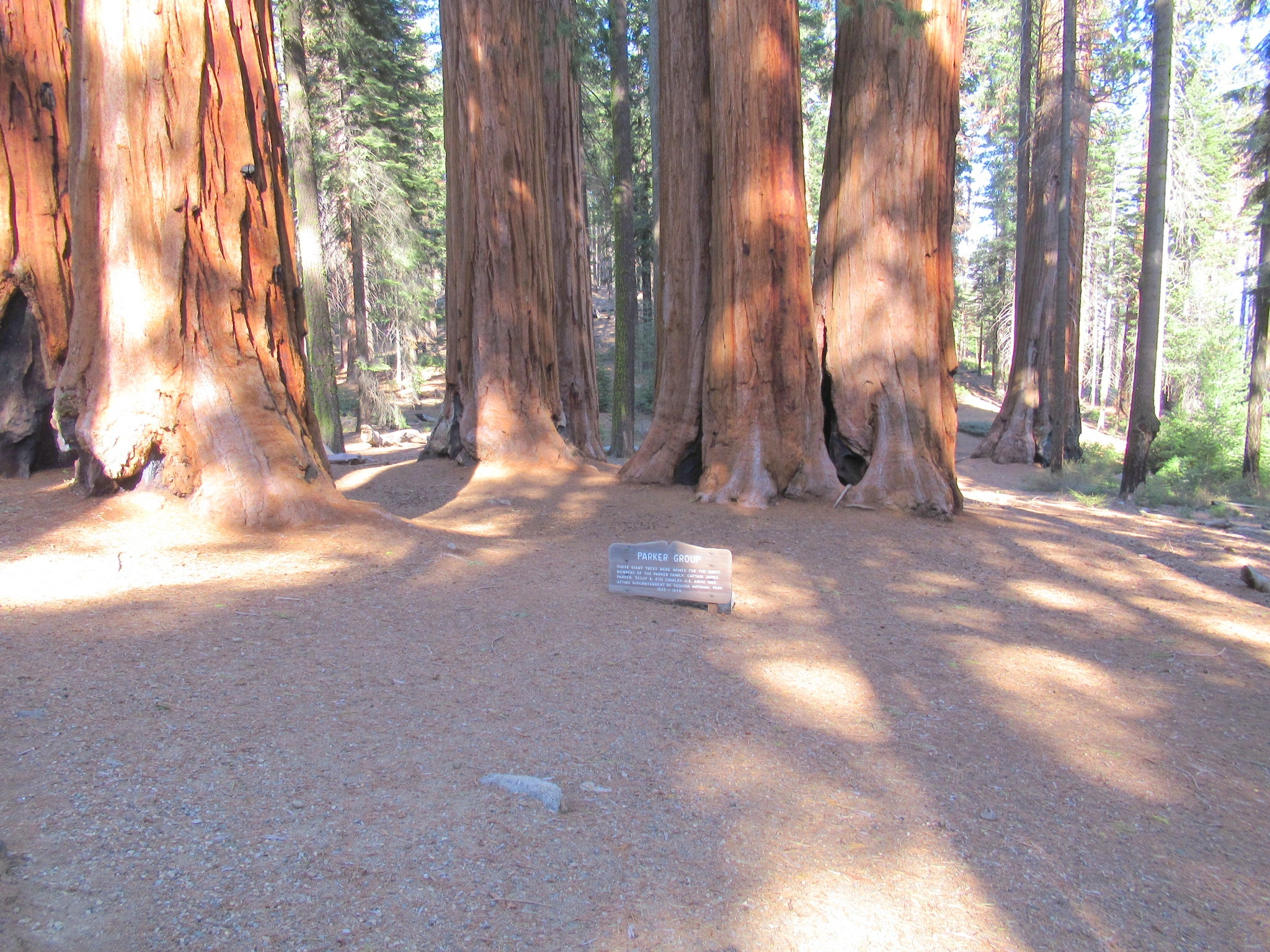 The Parker group of Sequoias