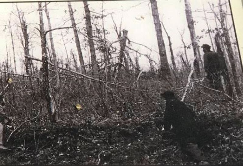 Trees Shattered by Artillery Shells, Virginia image. Click for full size.
