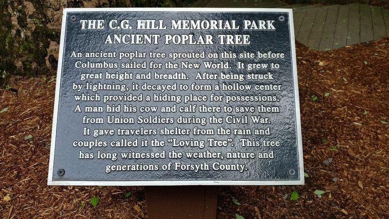 Ancient Poplar Tree Marker image. Click for full size.