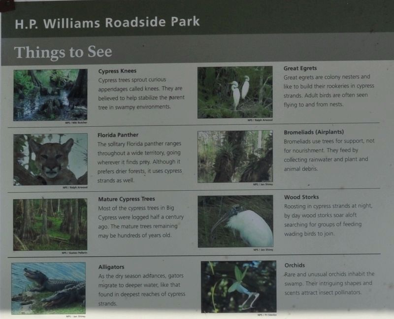 H. P. Williams Roadside Park Marker image. Click for full size.