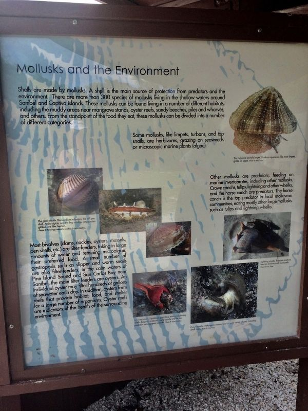 Mollusks and the Environment Marker image. Click for full size.