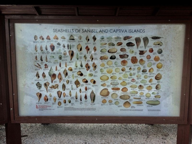 Seashells of Sanibel and Captiva Islands image. Click for full size.