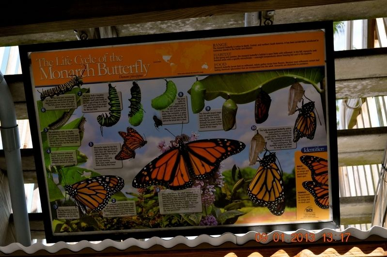 The Life Cycle of the Monarch Butterfly Marker image. Click for full size.