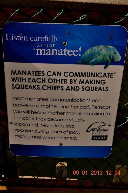 Listen carefully to hear a manatee! Marker image. Click for full size.