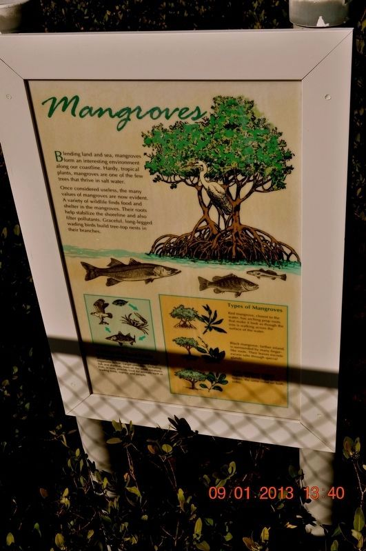 What Role Do Mangroves Play In An Estuary? Marker image. Click for full size.