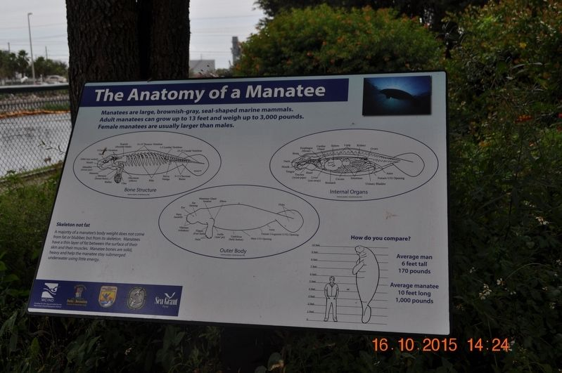 The Anatomy of a Manatee Marker image. Click for full size.