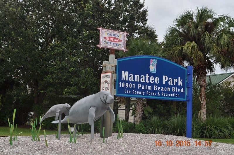 Why do Manatees Come to Manatee Park? Marker image. Click for full size.