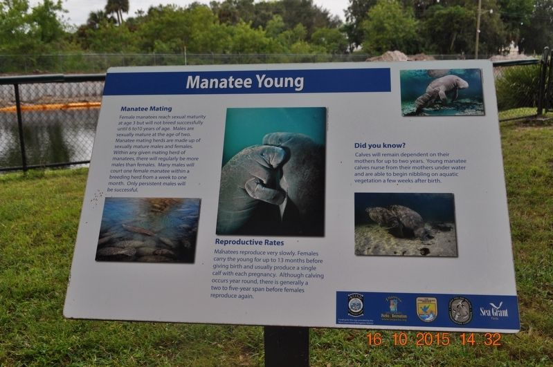 Manatee Young Marker image. Click for full size.