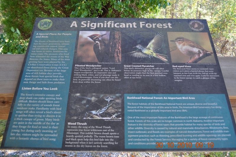 A Significant Forest Marker image. Click for full size.