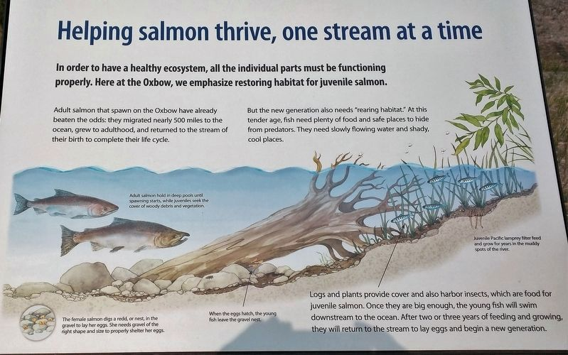 Marker 4 - Helping Salmon Thrive, One Stream at a Time image. Click for full size.