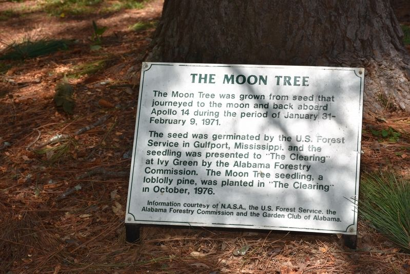 The Moon Tree Marker image. Click for full size.