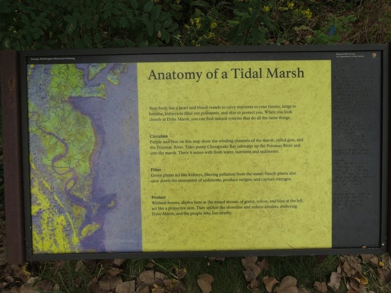 Anotomy of a Tidal Marsh Marker image. Click for full size.