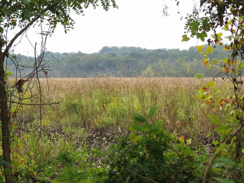 Dyke Marsh seen from near the Anatomy of a Tidal Marsh Marker image. Click for full size.