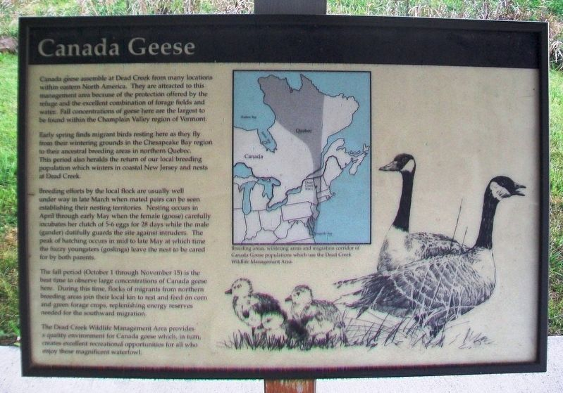 Canada Geese Marker image. Click for full size.