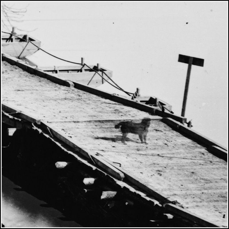 Dog standing on the bridge image. Click for full size.