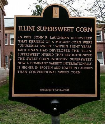 Illini Supersweet Corn Marker image. Click for full size.