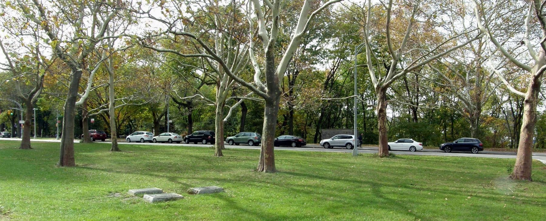 The Memorial Trees referenced in the Korean War and Four Chaplains markers image. Click for full size.