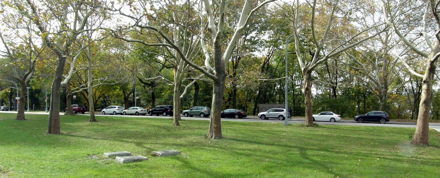 The Memorial Trees referenced in the Four Chaplains and Korean War markers image. Click for full size.