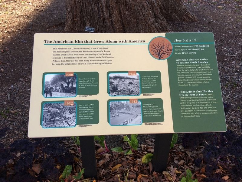 The American Elm that Grew Along with America Marker image. Click for full size.