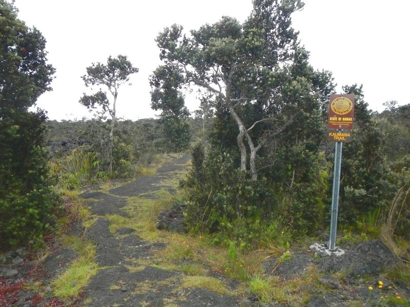 Hilo -- Pu'u'ō'ō Trail (Ka'ūmana Trail) image. Click for full size.