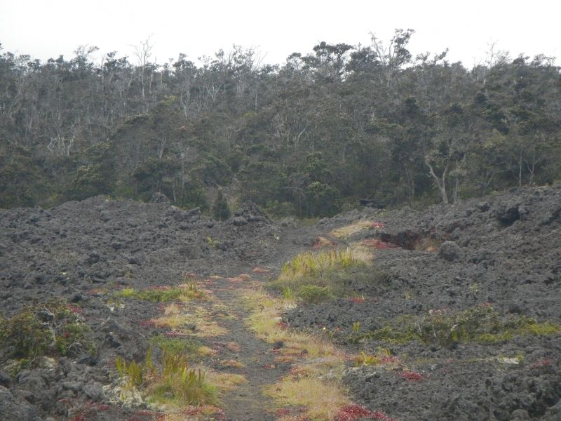 Pu'u'ō'ō - Volcano Trail image. Click for full size.
