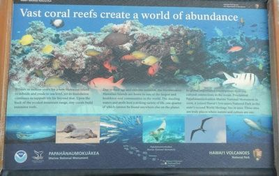 Vast coral reefs create a world of abundance Marker image. Click for full size.