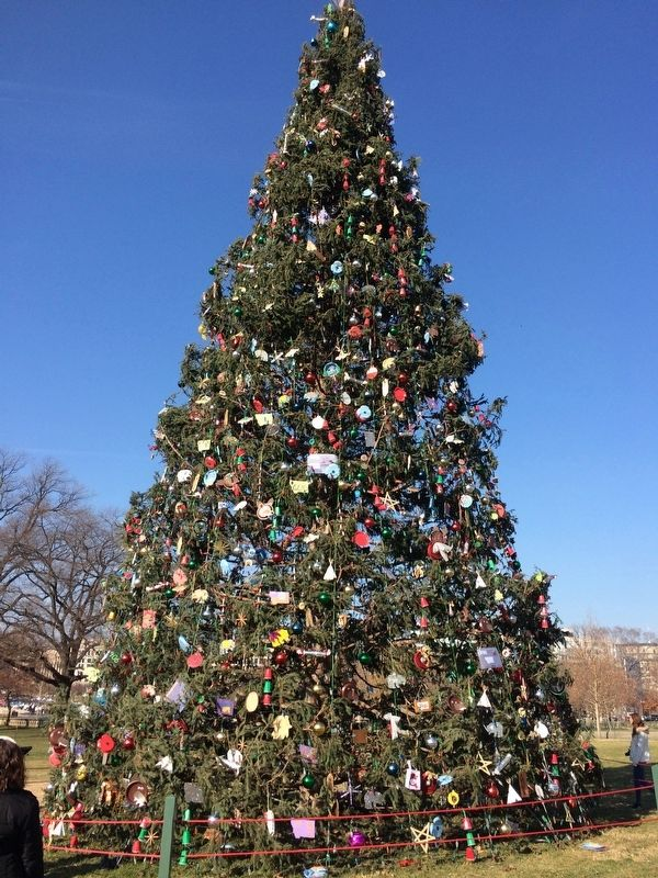 2017 Capitol Christmas Tree image. Click for full size.