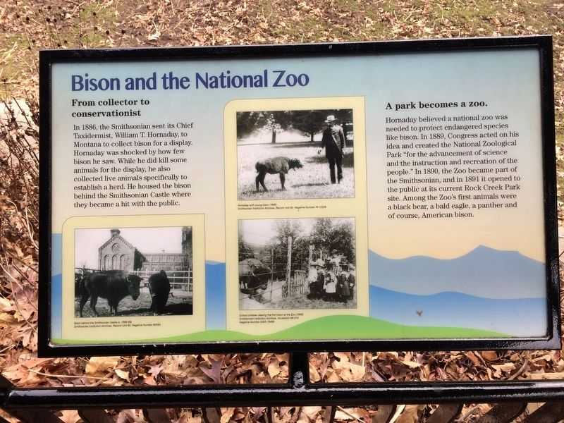 Bison and the National Zoo Marker image. Click for full size.