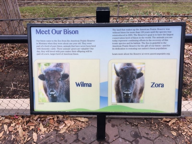 Meet Our Bison Marker image. Click for full size.