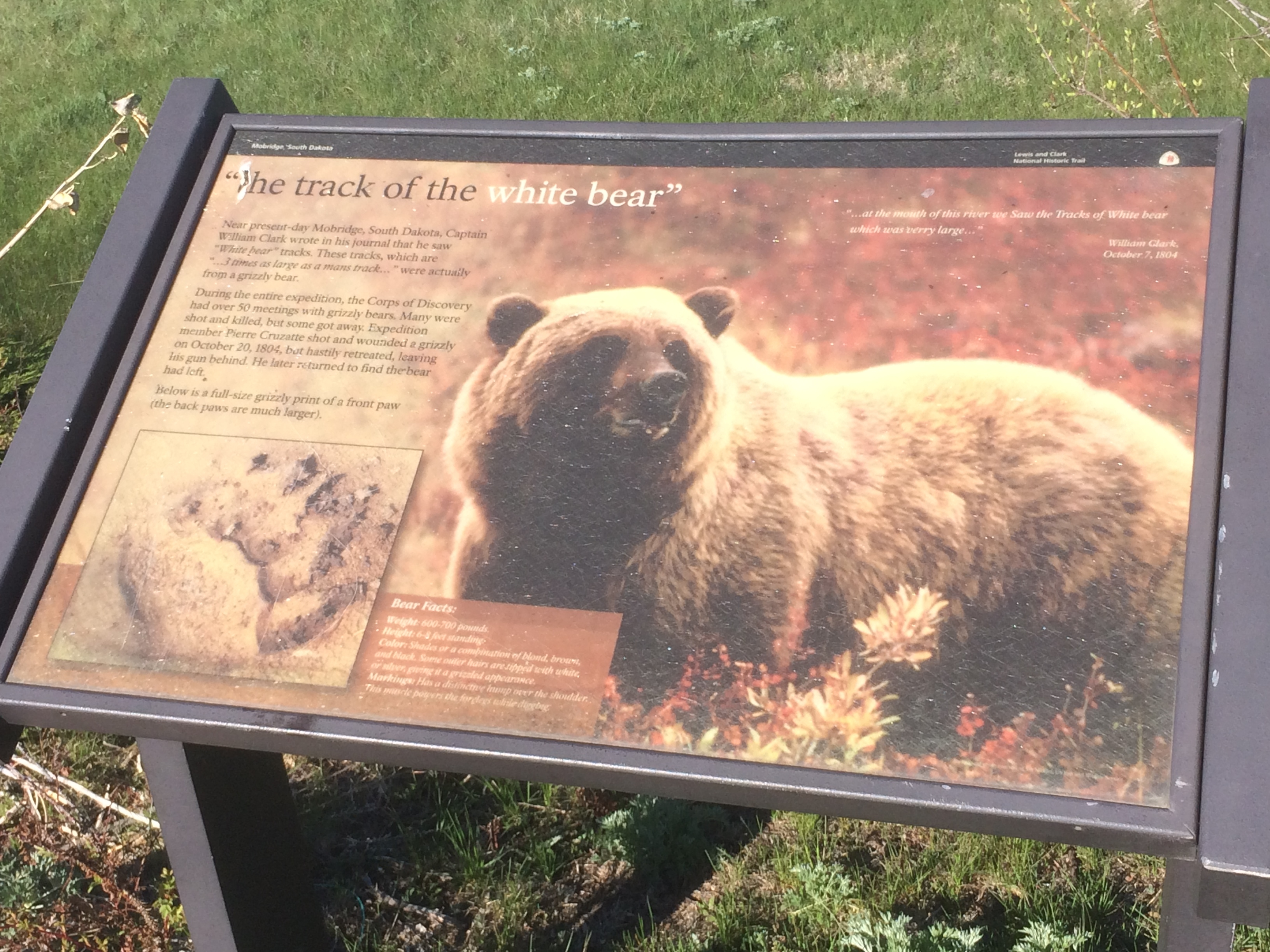 """the track of the white bear"" Marker"