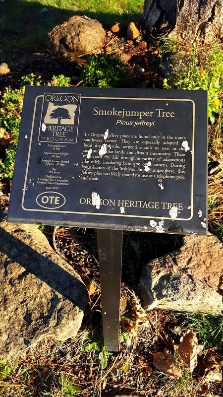 Smokejumper Tree Marker image. Click for full size.