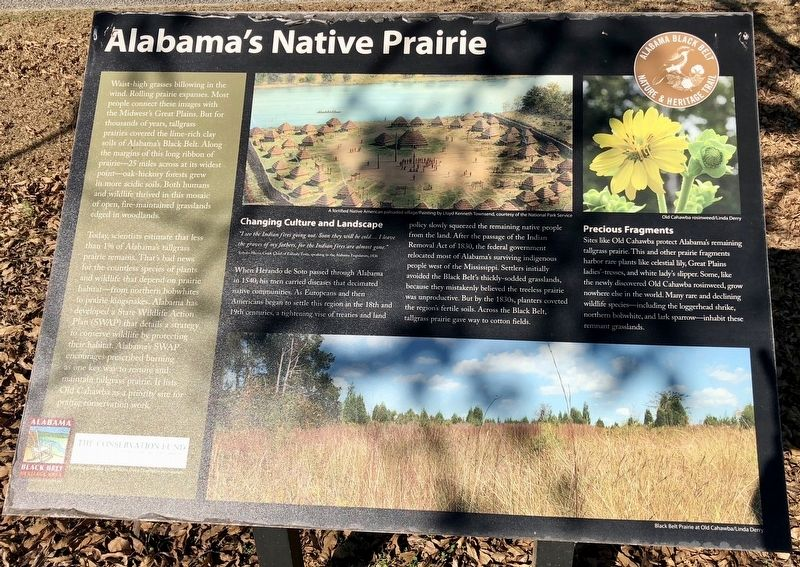 Alabama's Native Prairie Marker image. Click for full size.