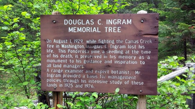 Douglas C. Ingram Memorial Tree Marker image. Click for full size.