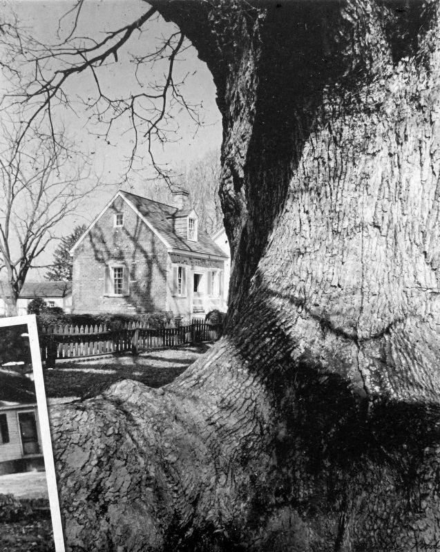 "The Wye Oak and the ""Little House"" image. Click for full size."