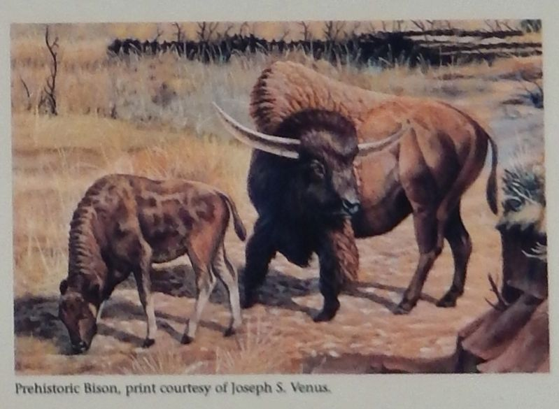 Marker detail: Ice Age Bison image. Click for full size.