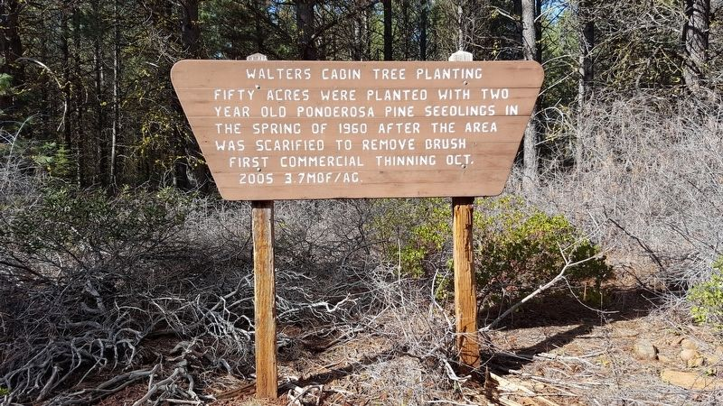 Walters Cabin Tree Planting Marker image. Click for full size.