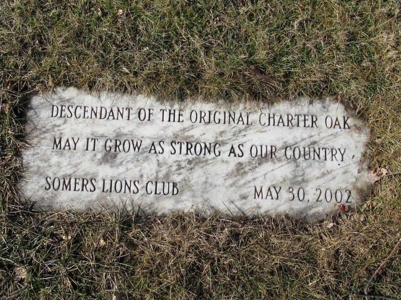 Descendant of the Original Charter Oak Marker image. Click for full size.