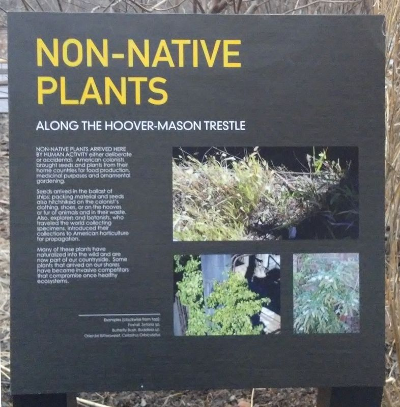 Non-Native Plants Marker image. Click for full size.