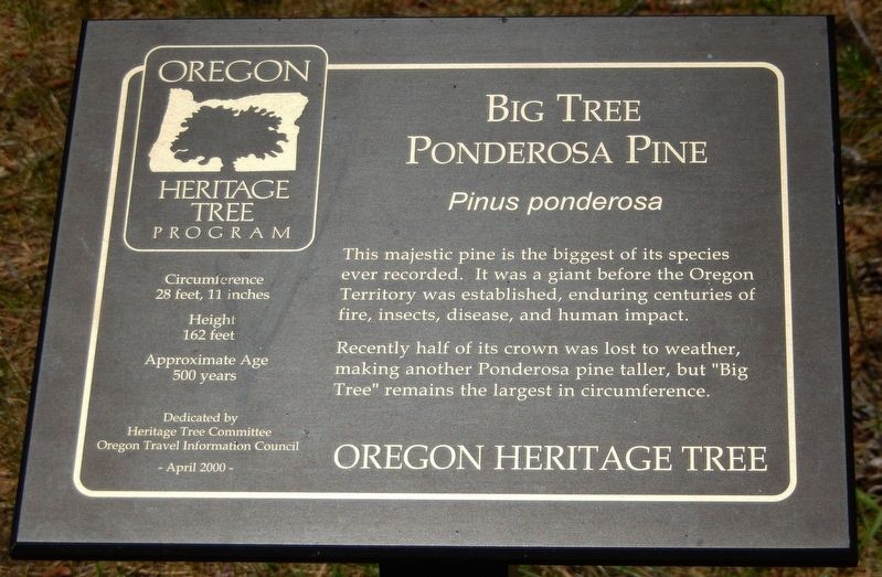 Big Tree Ponderosa Pine Marker image. Click for full size.