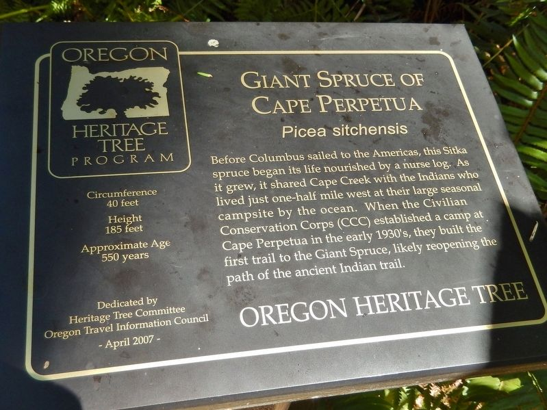 Giant Spruce of Cape Perpetua Marker image. Click for full size.