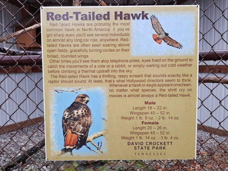 Red-Tailed Hawk Marker image. Click for full size.