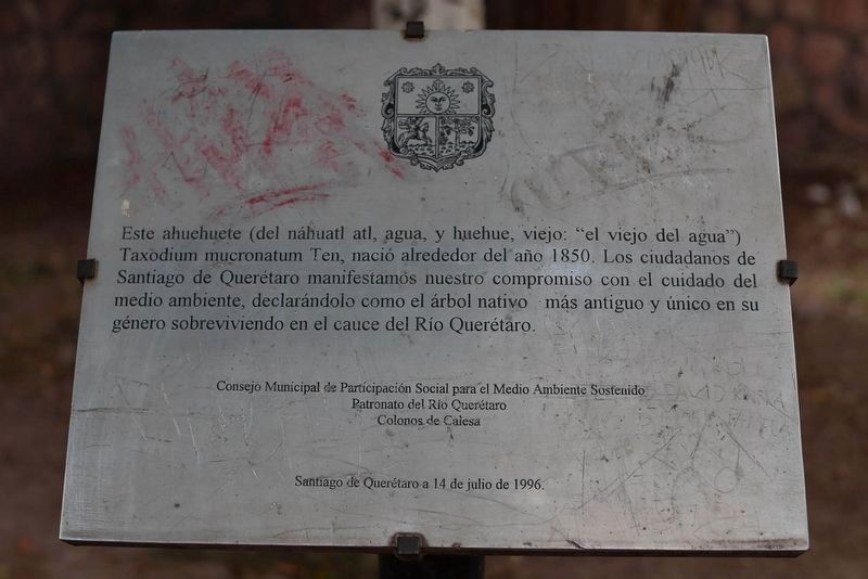 An earlier Ahuehuete of the Querétaro River Marker image. Click for full size.