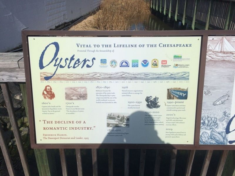 Oysters: Vital to the Lifeline of the Chesapeake Marker image. Click for full size.