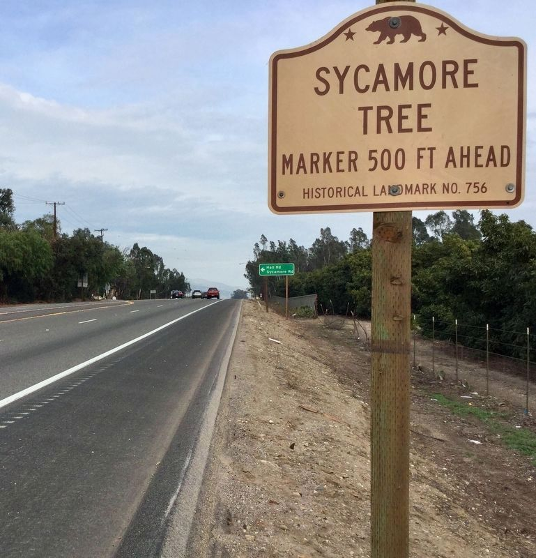 Sycamore Tree Sign image. Click for full size.