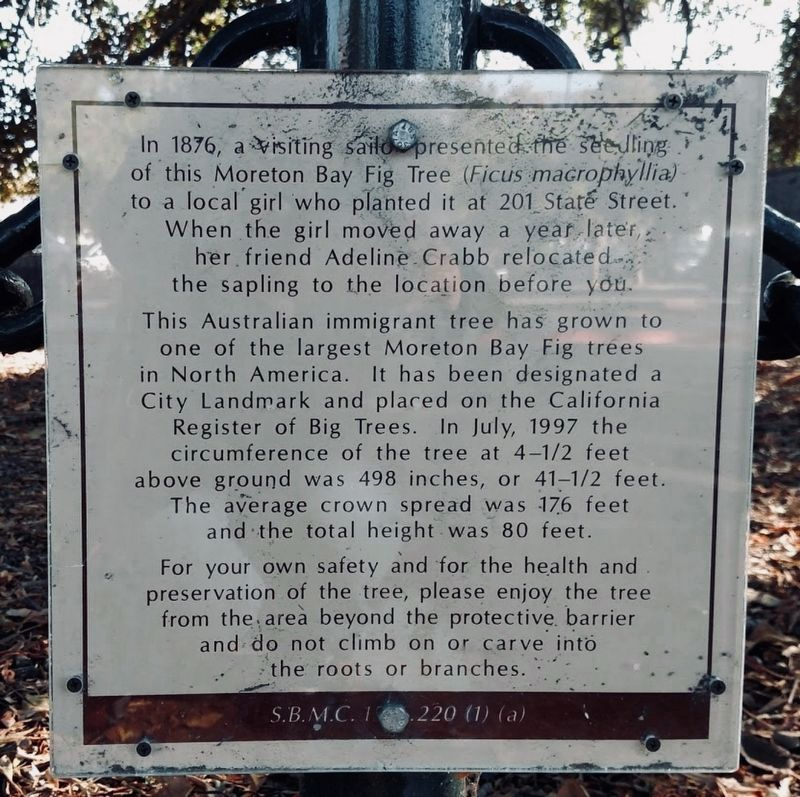 Moreton Bay Fig Tree Marker image. Click for full size.