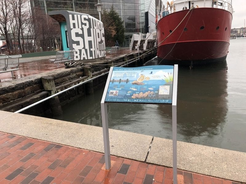 The Great Baltimore Oyster Partnership Marker image. Click for full size.