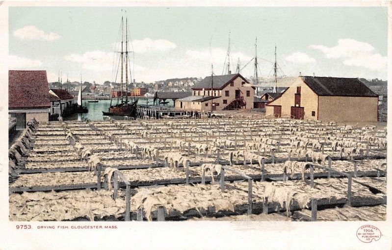 <i>Drying Fish, Gloucester, Mass.</i> image. Click for full size.