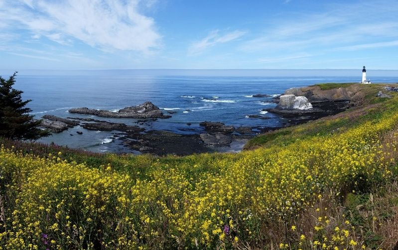 Yaquina Head and Cliff (<i>wide view</i>) image. Click for full size.
