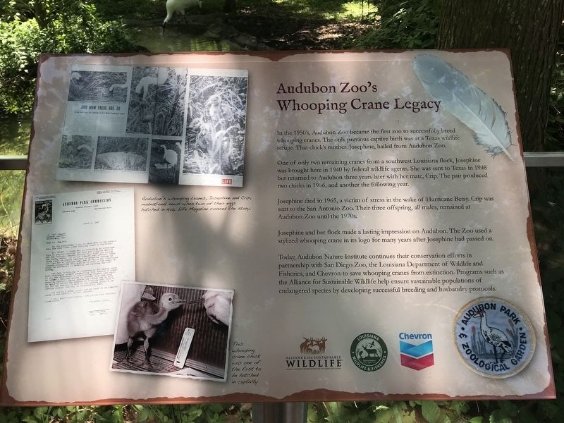 Audubon Zoo's Whooping Crane Legacy Marker image. Click for full size.