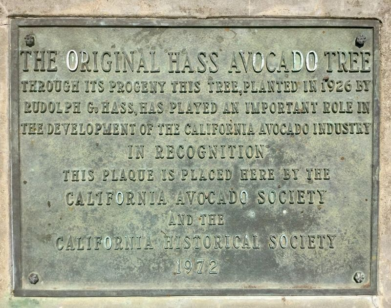 The Original Hass Avocado Tree Marker image. Click for full size.